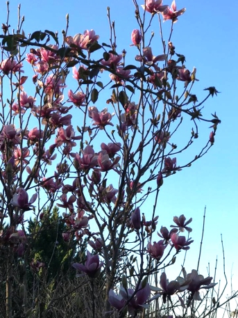 arvo light