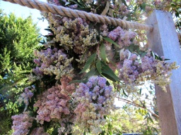budding up