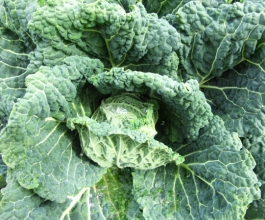cabbage soup diet coming up!