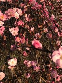 colour me pink