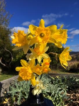 daffodillo
