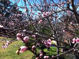 Spring buzz