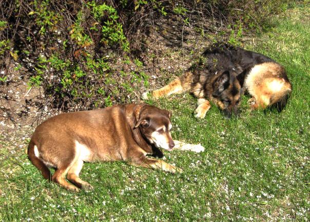 Spring sunbathing
