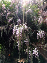 about to pop
