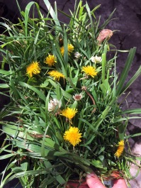 breakfast platter for Ginger's bunny