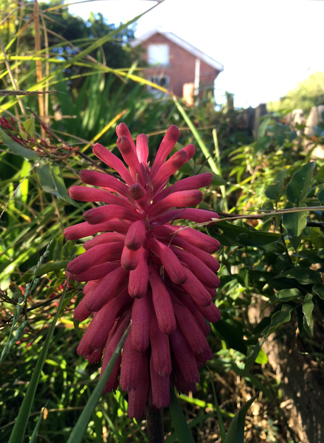 dear old thing