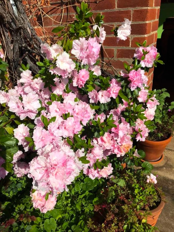 never enough pink