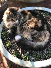 potted pussy