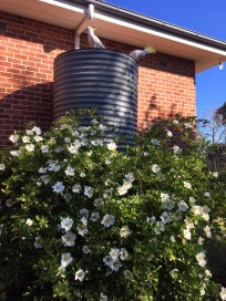 Sir Fred and Lady Amber de Byrd